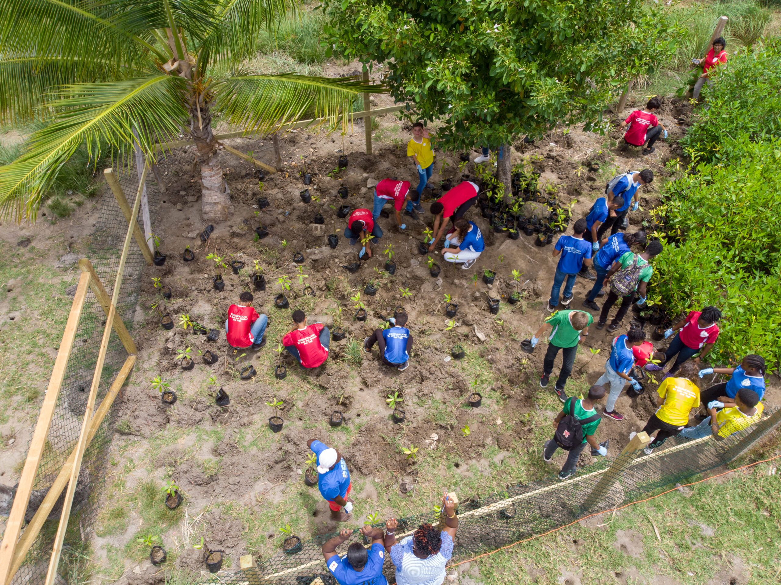 -Students planting mangroves in Grenada. Photo credit: TR Coms/TNC